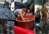 Dona periodista y sociedad civil 2 toneladas de pescado a familias de Tecomán