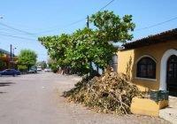 Ecología del municipio invitarte tecomense a tramitar dictamen de poda o derribo de árboles