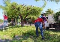 Ecología ha atendido 200 podas o derribos en árboles que representan peligro