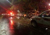 55 árboles caídos y afectaciones en cableado eléctrico, saldo de lluvia: PC Estatal