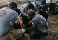 Captura Protección Civil cocodrilo de casi 2 metros cerca de un rancho en Los Reyes, Armería