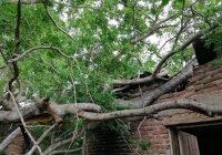 Por reblandecimiento cae árbol en vivienda en Armería