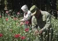 Primeros eslabones del narcotráfico en México