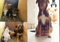 Envenenan a perra que amamantaba a 7 cachorros; buscan adoptantes