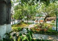 El municipio de Colima cuenta con más de 3500 árboles en espacios públicos