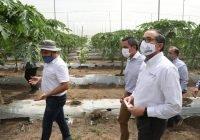 Fortalece el Gobierno Estatal proyecto de Investigaciónpara producir papaya y chile
