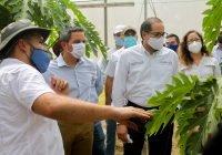Muestran avances de proyecto nacional sobre papaya y chile habanero, coordinado por la UdeC