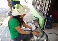 Con el Complejo Administrativo Animal y Veterinario se dará vida digna a animales callejeros