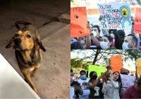 En Sinaloa exigen justicia para Rodolfo, un callejerito asesinado a sangre fría