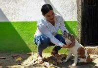 Vicky Ledesma propone campaña de esterilización permanente y gratuita para mascotas de Tecomán