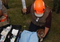 En Puebla, rescatan a los dos perros que cayeron en el socavón