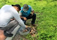 Enseñan cómo elaborar biocarbón