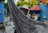 Con personal especializado, atienda PC de Tecomán reportes por enjambres de abejas