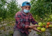 Registra balanza comercial agroalimentaria de México superávit de cuatro mil 959 millones de dólares en enero-julio