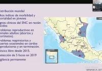 Enfermedades en granjas afectan producción de carne de cerdo: Lizeth Campos
